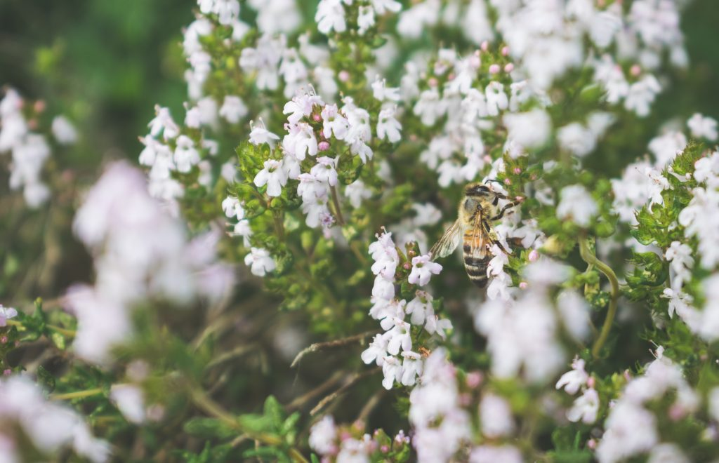 Bee by Arnaud Weyts on Unsplash