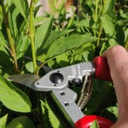 Which Are The Best Secateurs