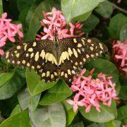 Butterfly Wildlife by Vishal Kashyap on Unsplash