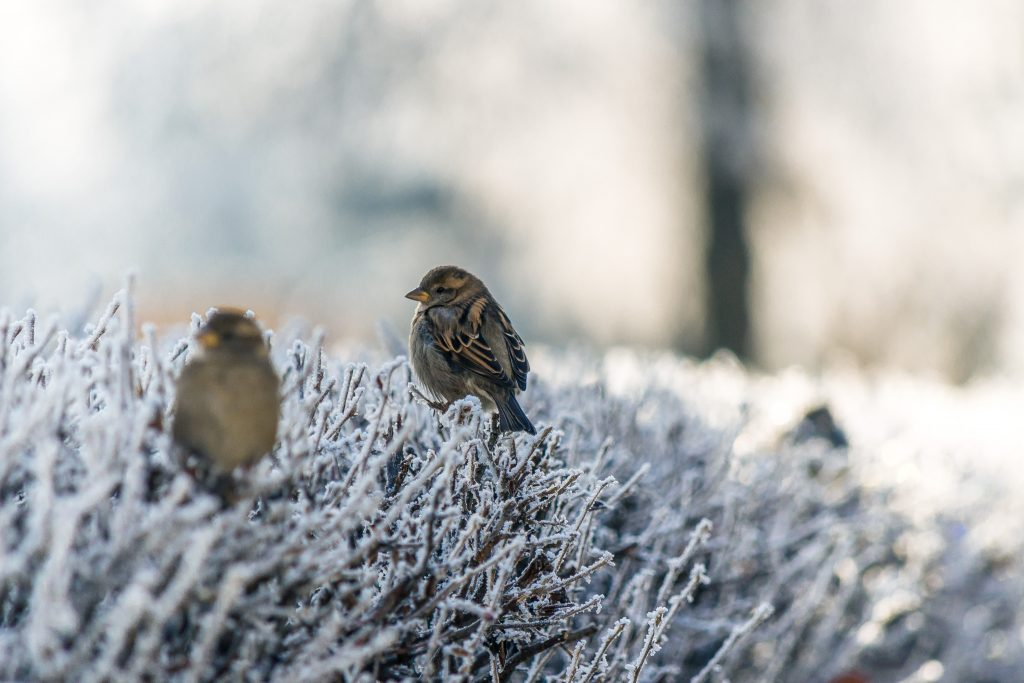 Frosty Birds by Genessa Panainte on Unsplash