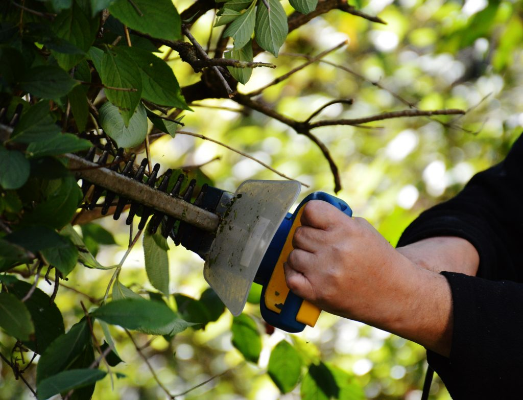 Hedge Trimmer by Alexas_Fotos from Pixabay