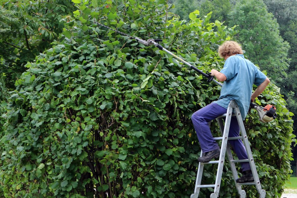 Hedge Trimmer by Manfred Antranias Zimmer from Pixabay