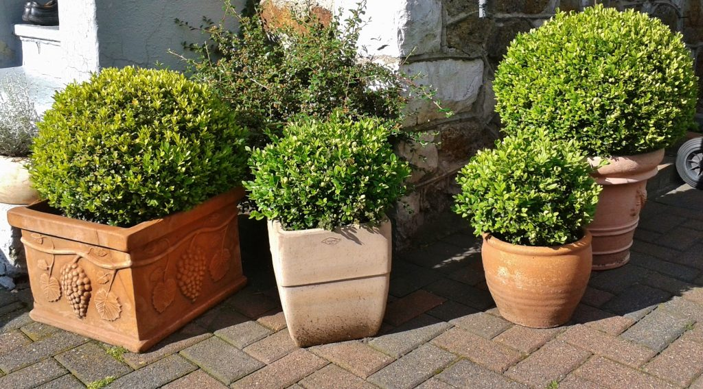 Topiary for Beginners