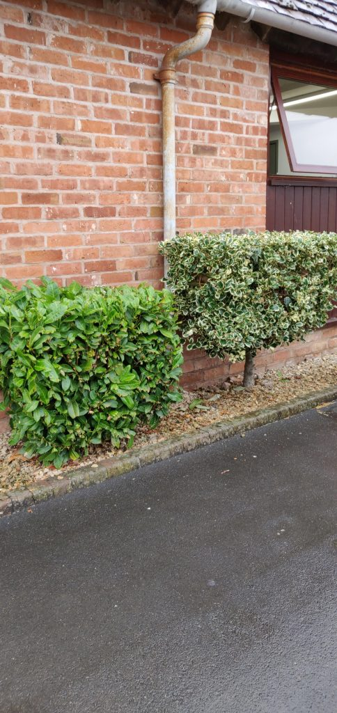 Cubed Hedges at Warwickshire Event Centre