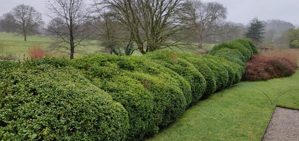 Trimmed Hedges at Sizergh National Trust