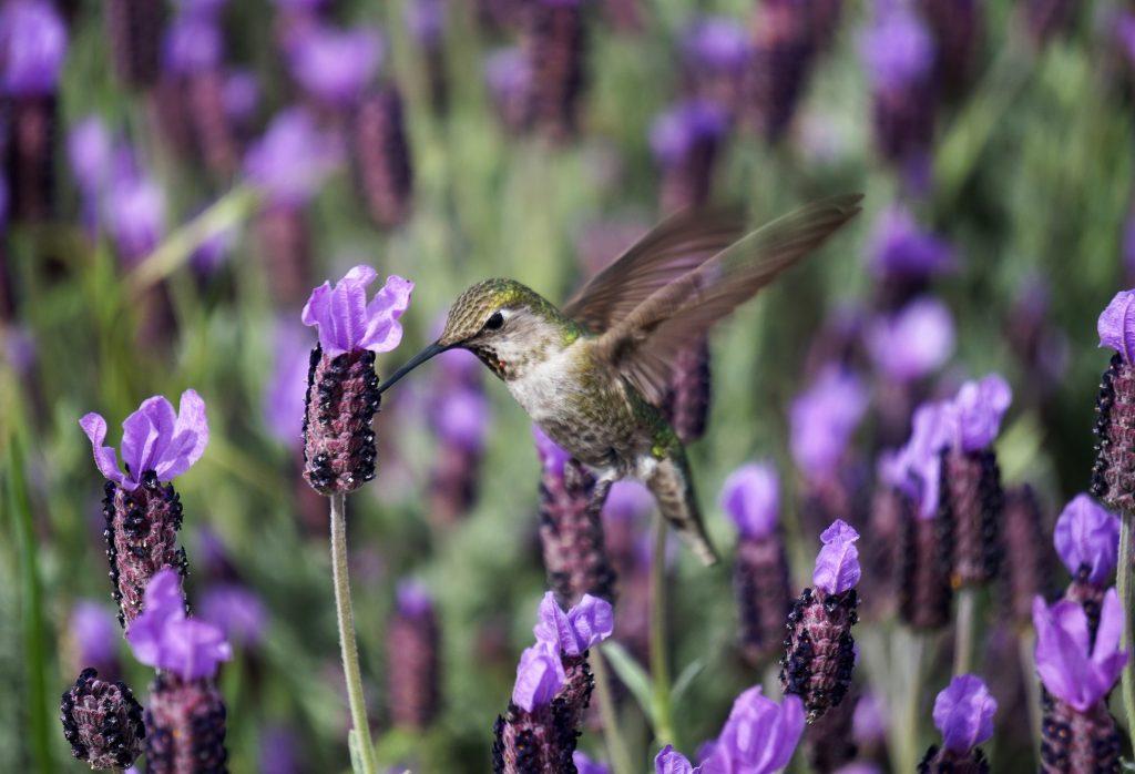 Lavender Flowers by Olesya Grichina on Unsplash