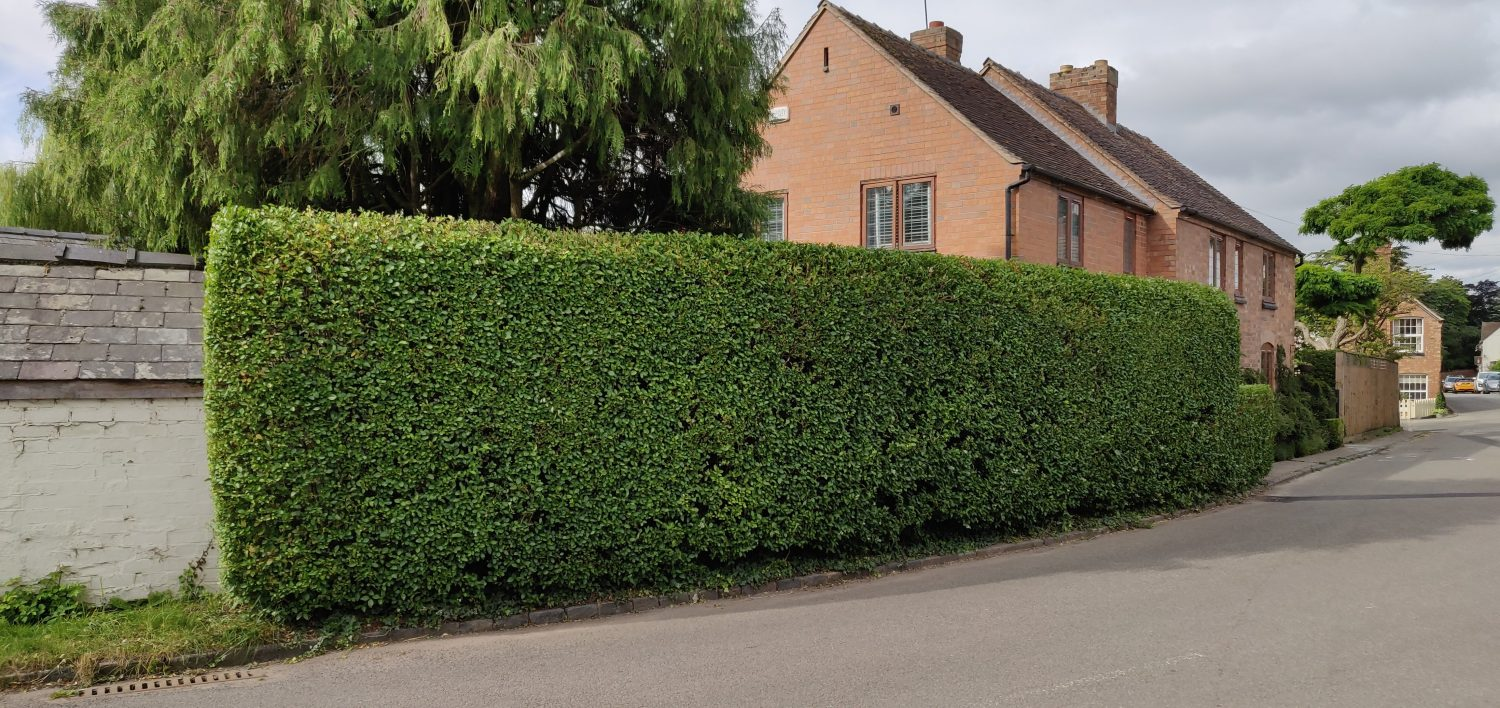 A thick healthy boundary hedge