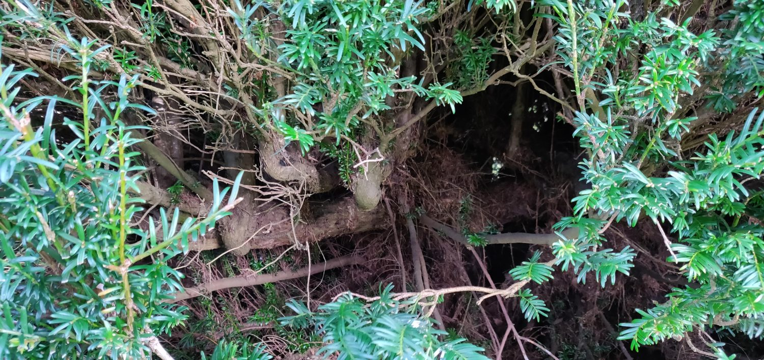 The Skeleton Of A Hedge