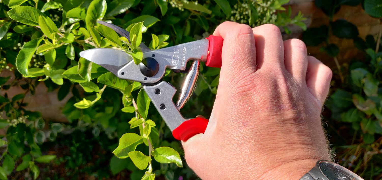 How To Clean and Maintain Your Secateurs
