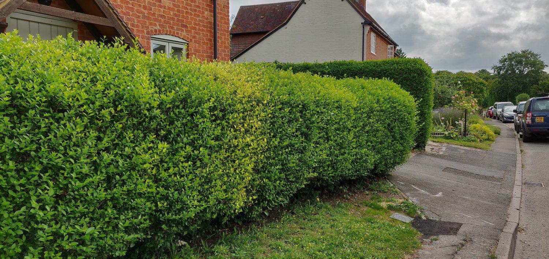 Boundary Hedges